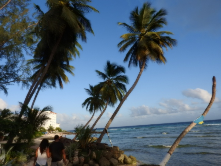coconut palms, lovers, sea