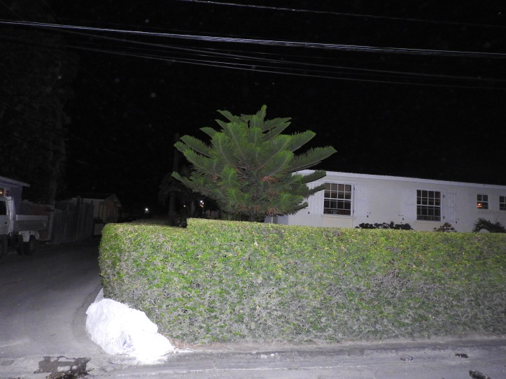 House With Hedge. Night Shot Using Flash