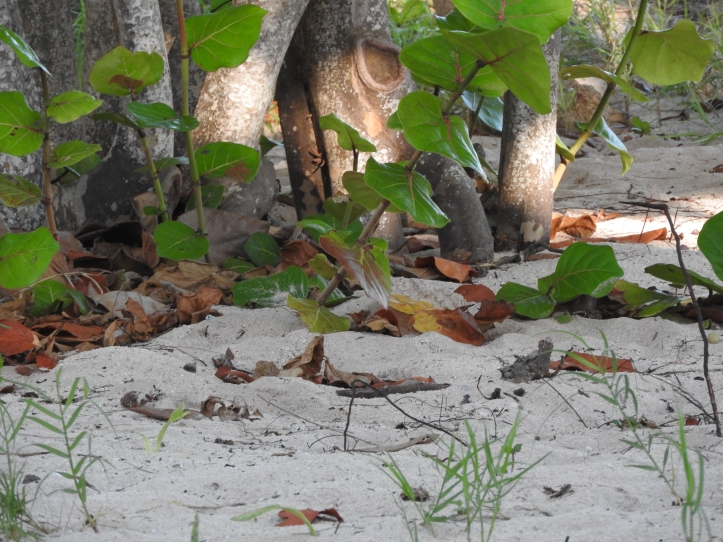 Sand, Almond Trees